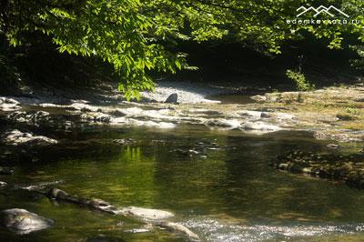 Каштан над рекой